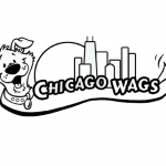 Chicago Wags